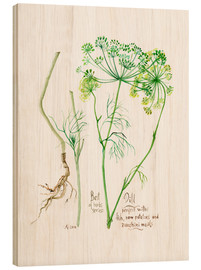 Bois  Herbs & Spices collection: Dill - Verbrugge Watercolor