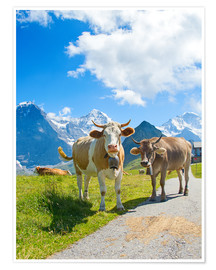 Poster  Vaches au pâturage