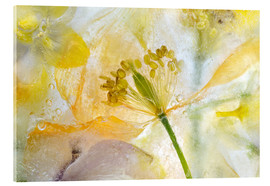 Verre acrylique  Welsh Poppy - Mandy Disher