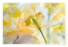 Poster  Welsh Poppy - Mandy Disher