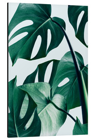 Tableau en aluminium  Monstera - Uma 83 Oranges