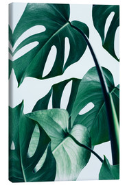 Toile  Monstera - Uma 83 Oranges
