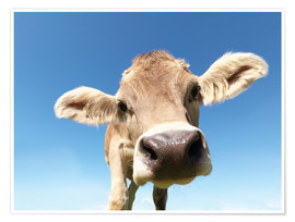 Poster  Vache curieuse - Jens Lucking