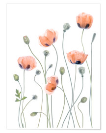 Poster  Coquelicots poétiques - Mandy Disher