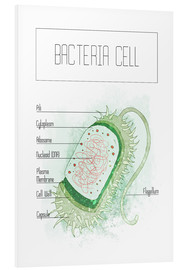 Forex  Bacteria Cell - RNDMS