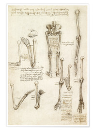 Leonardo da Vinci - the bones of the arm and leg