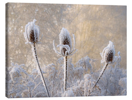Toile  Hoar frost on a teasel in wintertime - Katho Menden