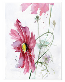 Poster  Cosmos aquarelle - Verbrugge Watercolor