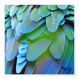 Poster Plumage iridescent