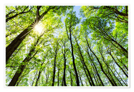 Poster Green forest in spring in the sunlight
