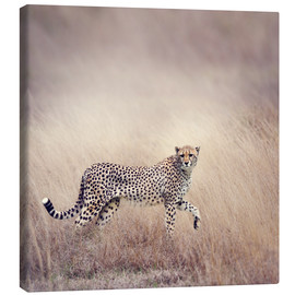 Toile  Cheetah on the hunt