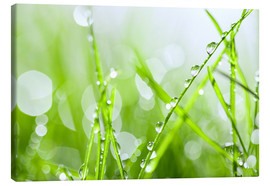 Toile  rain-wet grass
