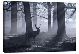 Toile  A male red deer stag waits in the early morning mists of Richmond park, London. - Alex Saberi