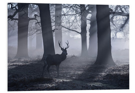 Tableau en PVC  A male red deer stag waits in the early morning mists of Richmond park, London. - Alex Saberi