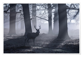 Poster A male red deer stag waits in the early morning mists of Richmond park, London.