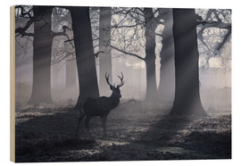 Tableau en bois  A male red deer stag waits in the early morning mists of Richmond park, London. - Alex Saberi