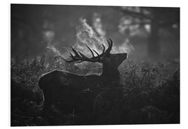 Tableau en PVC  A large male deer stag bellows out in a cold winter landscape of Richmond park, London. - Alex Saberi