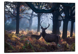 Tableau en aluminium  Un cerf à Richmond Park, Londres - Alex Saberi