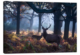 Toile  A red deer stag in a misty forest in Richmond park, London. - Alex Saberi