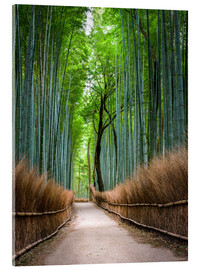 Verre acrylique  Bamboo Forest in Kyoto Sagano Arashiyama, Japan - Jan Christopher Becke