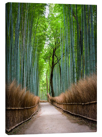 Toile  Bamboo Forest in Kyoto Sagano Arashiyama, Japan - Jan Christopher Becke