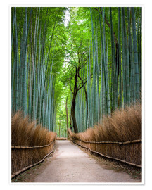 Poster  Bamboo Forest in Kyoto Sagano Arashiyama, Japan - Jan Christopher Becke