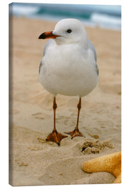 Toile  Seagull in the sand