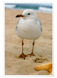 Poster  Seagull in the sand