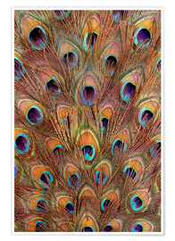 Poster  Peacock feathers bronze