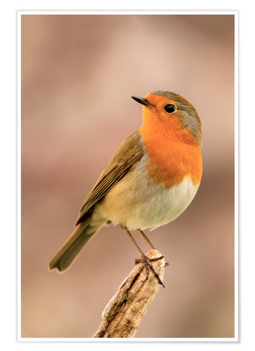 Poster Robin is offended