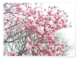 Poster  Pink Blooming