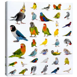 Toile  Parrots and parakeets