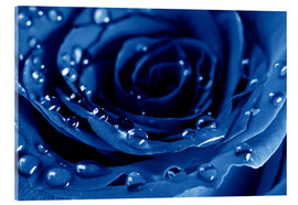 Verre acrylique  Blue Roses with Water Drops