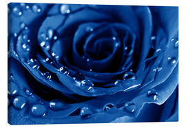 Toile  Blue Roses with Water Drops