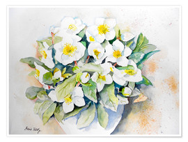Poster Hellebores 3