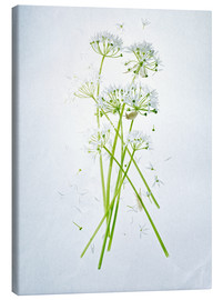 Toile  Allium ursinum, medicinal herb - Axel Killian