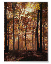 Poster Light incidence in the autumn beech forest