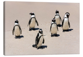 Tableau sur toile  Gruppe afrikanischer Pinguine, Boulders Reserve, Boulders Beach - Catharina Lux