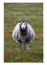 Poster  ram - Catharina Lux