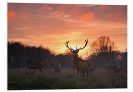 Forex  A Red deer stag, Cervus elaphus, standing in London's Richmond Park. - Alex Saberi