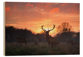 Bois  A Red deer stag, Cervus elaphus, standing in London's Richmond Park. - Alex Saberi