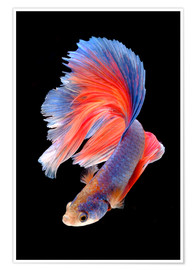 Poster  Fish fin