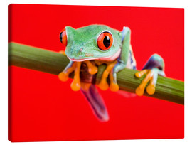 Tableau sur toile  Rotaugenlaubfrosch to red
