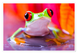 Poster  little green frog
