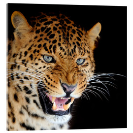 Verre acrylique  snarling leopard
