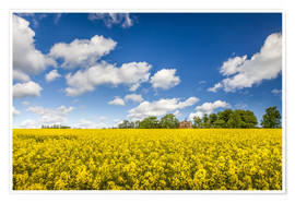 Poster  Spring in yellow and blue on Bornholm - Christian Müringer
