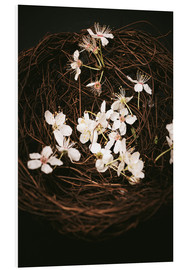 Tableau en PVC  Cherry Blossoms in Nest - Sybille Sterk