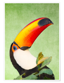 Poster A colourful toucan bird on a tropical background.