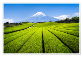 Jan Christopher Becke - Tea plantation with Mount Fuji in Shizuoka, Japan