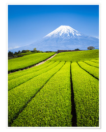 Jan Christopher Becke - Tea Plantation and Mount Fuji in Shizuoka, Japan